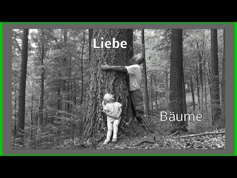 Der Gärtner im Wald Detlef nimmt euch mit auf eine kleine Reise den Wald entdecken