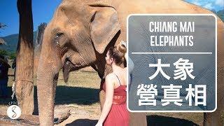 Spice 泰國 | 騎大象不好,不騎大象的大象營其實也不行:清邁 自由行 旅遊