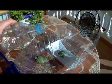 Cuando Es Mejor Adoptar Una Tortuga Tortuguera Casera Youtube