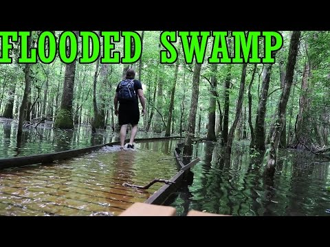 Exploring a Flooded SWAMP!! Congaree National Park, SC