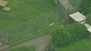 Tiger kills zookeeper in England