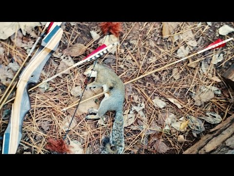 [GRAPHIC] Squirrel Kill with Recurve Bow! Skinning and Cleaning the fast way.