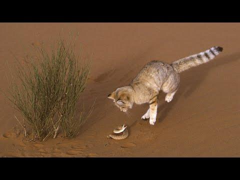 Семейство кошачьих - Знай ТВ смотреть онлайн в hd качестве - VIDEOOO