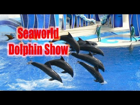 Seaworld dolphin show   seaworld documentary