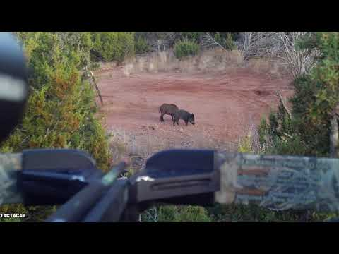 Jeff's Hog with a crossbow