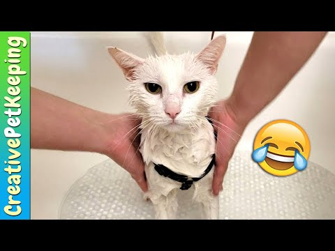 Bathing MY CATS  🚿🐱 Giving cat a bath