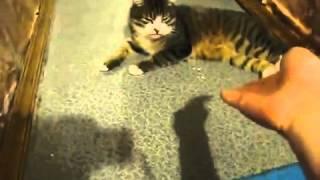 Кот поет под флейту