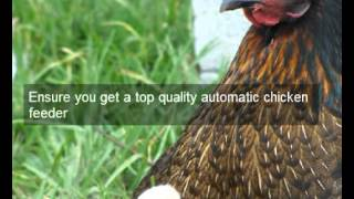 Chicken Feeders | Calaveras | Ca | Automatic Chicken Feeder | Feeding Chickens | Poultry Feeders