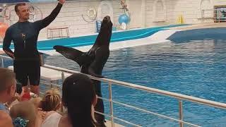 Шоу дельфинов и морских котиков в Анталии (Kundu)