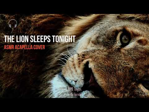 A Lion Sleeps Tonight Acapella ASMR Cover (30 mins loop for