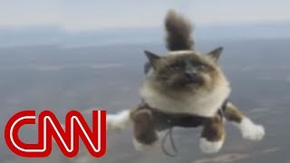 Repeat youtube video Skydiving cats cause uproar