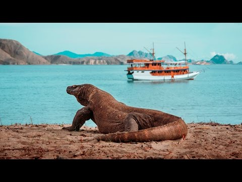 KOMODO ISLAND - Sailing Indonesia