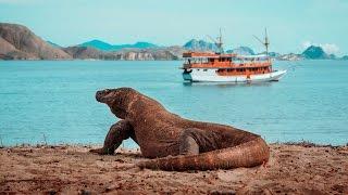 KOMODO ISLAND - Sailing Indonesia