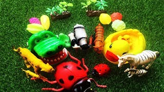 Zoo Animals Toys Baby find Mom Learn Colors Animals Names and Sounds Education Video Toys for Kids