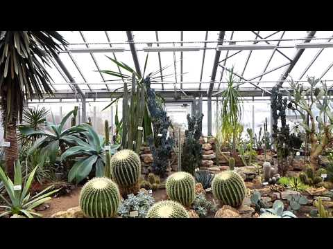 Ботанический сад С-Петербурга.Тропики.Фрагменты экскурсии 29 марта 2014 года.