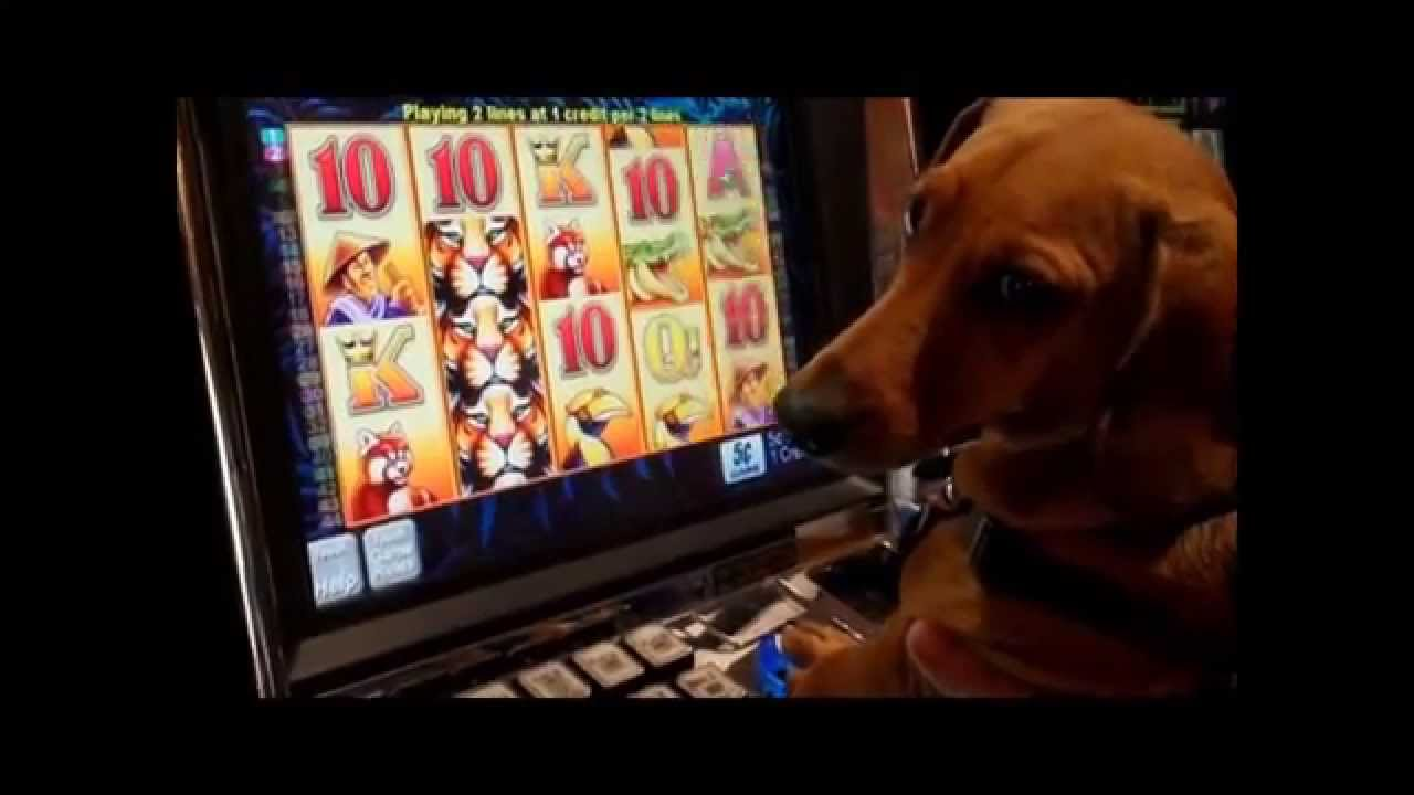 Dogs Slot Machine - Free Online Game by H5G