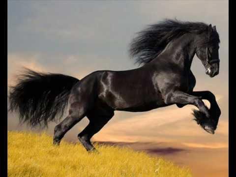 Les plus beaux chevaux wmv youtube - Le plus beau homme au monde ...