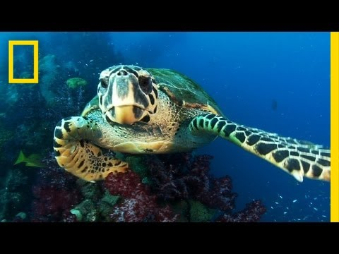 New Protected Ocean Area Is Bigger Than All U.S. National Parks Combined | National Geographic