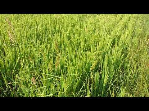 Telugu Waste Decomposer NCOF + Sub Soil only Goutham Padala   Use DRUM SEEDER
