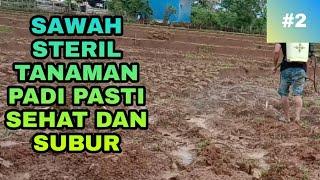 Download lagu CARA STERILKAN SAWAH DARI PENYAKIT SEBELUM MENANAM PADI