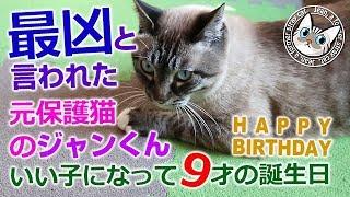 ジャンくん9歳の誕生日おめでとう!保護猫から家猫【Jean & Pont 1687】2019/3/25 #ジャン #ポン thumbnail