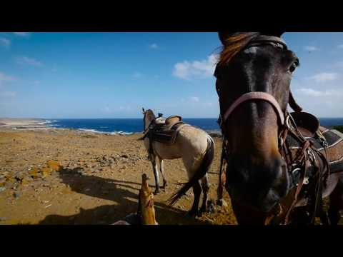 Horseback Riding in Aruba for Travel Channel