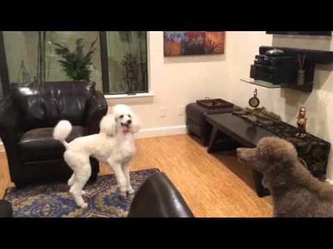 What has these dogs so excited? PBS of course!!!