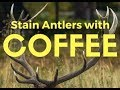 How to Stain and Restore Antlers and Horns with Coffee Grounds (Also Works With Tea!)