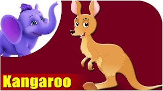 Kangaroo - Animal Rhymes in Ultra HD (4K)