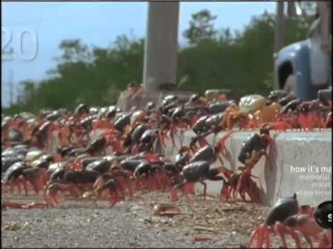 Image result for crab infestation