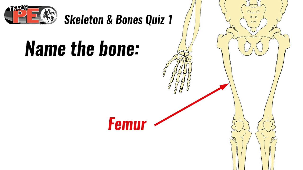 skeleton and bones quiz 1 test  [ 1280 x 720 Pixel ]