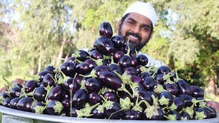 Brinjal Masala Recipe || Eggplant curry for 200Orphan kids || Nawabs kitchen
