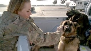 Military Working Dogs In Afghanistan