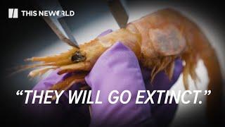 Rising Ocean Temperatures Shut Down Shrimp in Maine