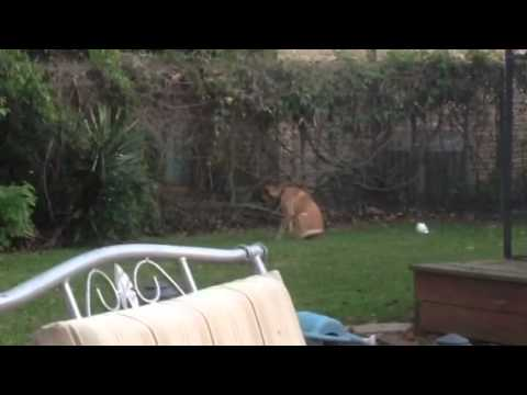 dog-barking-at-neighbors-kids