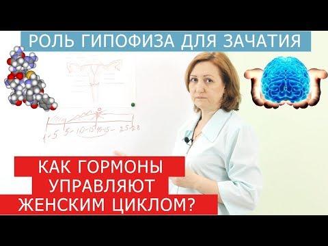 Как гормоны влияют на зачатие? Эндометриоз и беременность.