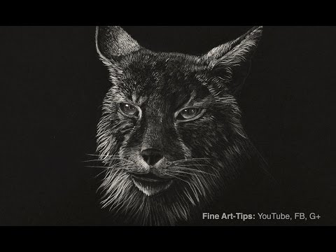 How to Draw a Lynx - Bobcat