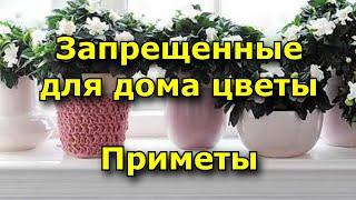 Запрещенные для дома цветы. Приметы.