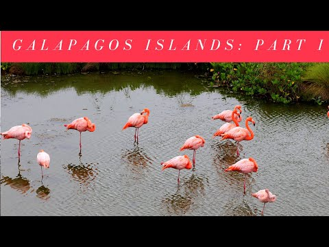 Episode 10 - Day One and Two on the Galapagos Islands