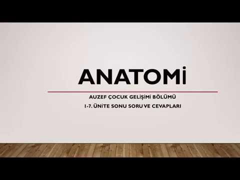 AUZEF Anatomi 2019 Final Sınav Soruları