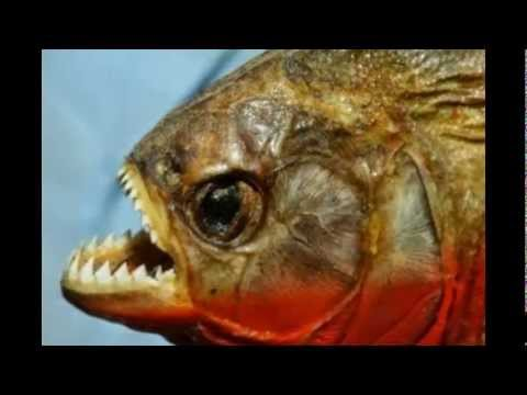 World top ten of the most dangerous fish of the world for Is fish bad for you