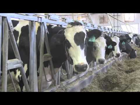Robotic milking machines give dairy farms a helping hand