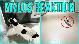 MYLOS REAKTION auf sein NEUES ZUHAUSE & IKEA SHOPPING - Kathi2go