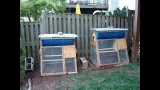 Package Bees Installed In Barrel Top Bar Hive Chicken Coop