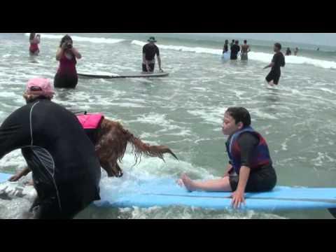 Surf dog Ricochet surfs with Hunter