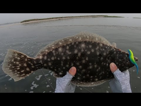 Flats And Bar Flounder (Fluke) Fishing With New Gulp Color