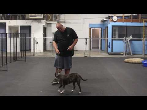Dog Training in Minutes- Helping A Dog Overcome Hyperactivity and Aggression