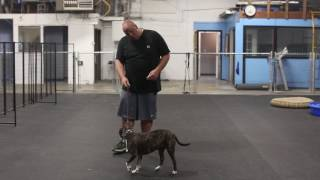 Dog Training in Minutes Helping A Dog Overcome Hyperactivity and Aggression