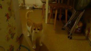 Два кота в квартире: очередная потасовка на кухне