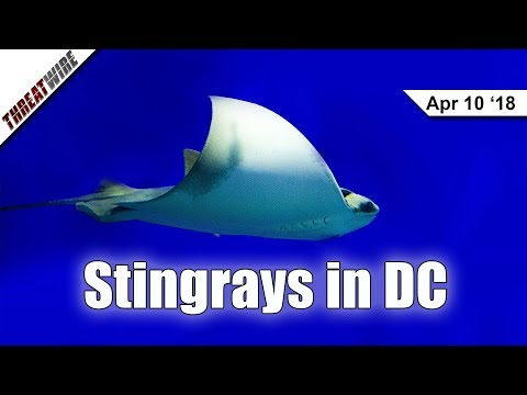 Stingrays Found in DC?! Best Buy and Delta Hit with Malware - ThreatWire